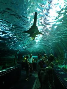 Aquariumb3